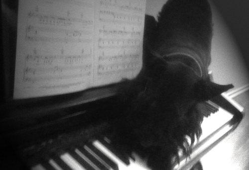 Musical Scottie