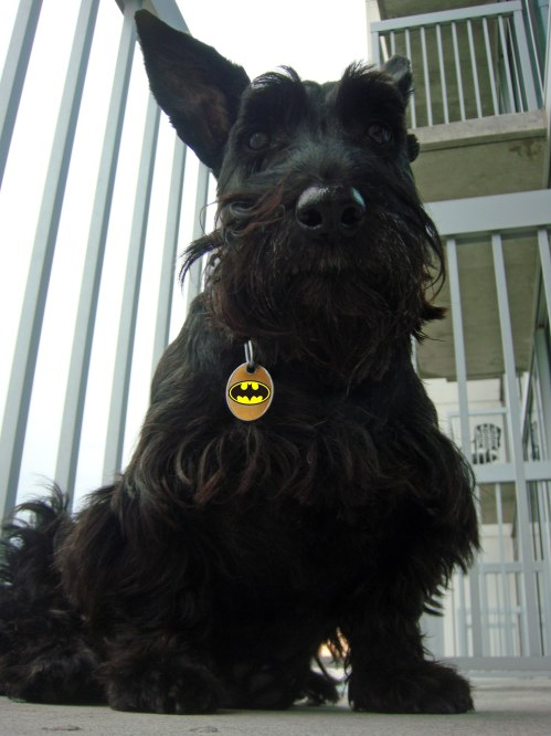 The Dark Scottie Rises