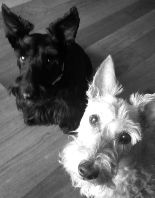 Take us with you, Scottie Mom?