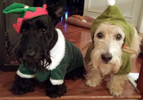 Santa's elves here to help you find the perfect gift for the Scottie Mom in your life!